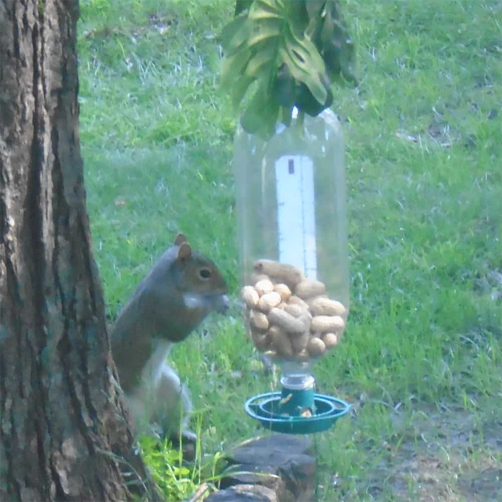 Green Soda Bottle Top Bird and Squirrel Feeder