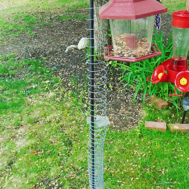 slinky as best squirrel-proof bird feeder squirrel blocker