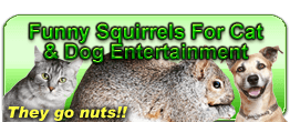 squirrels for dogs to watch