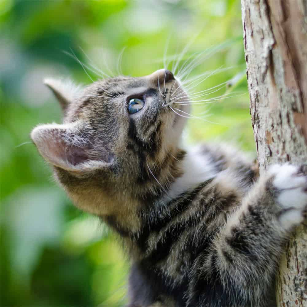 cat looks for her squirrel friend
