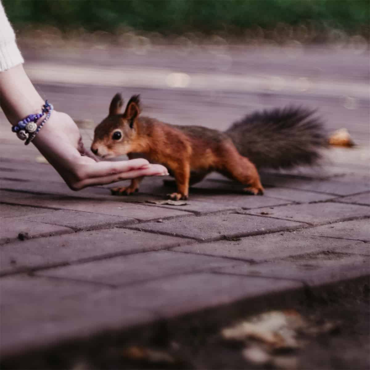 Squirrels Show The Way - Comparing Squirrels To Dogs