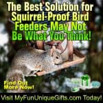 best solution for squirrel-proof bird feeders 2019