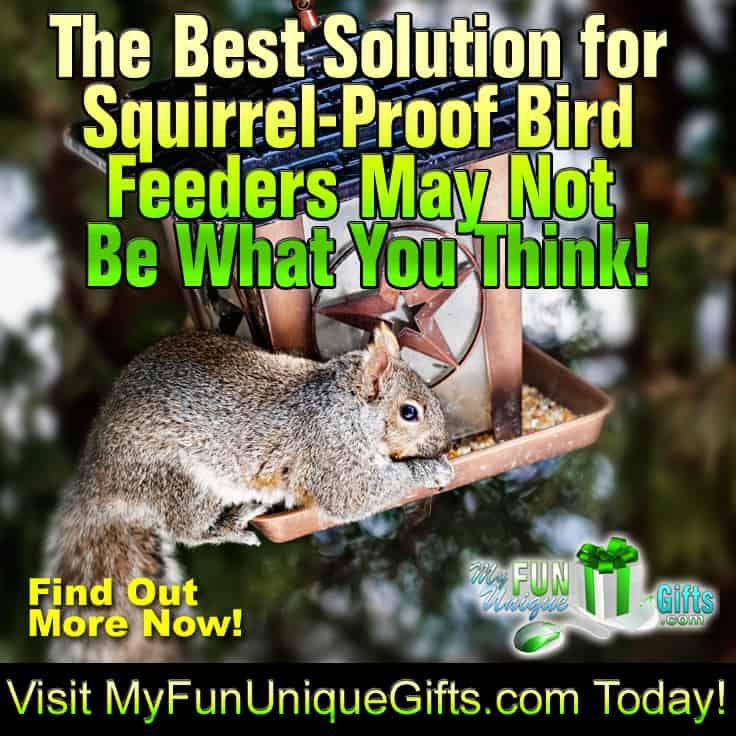 best solution for squirrel-proof bird feeders 2019