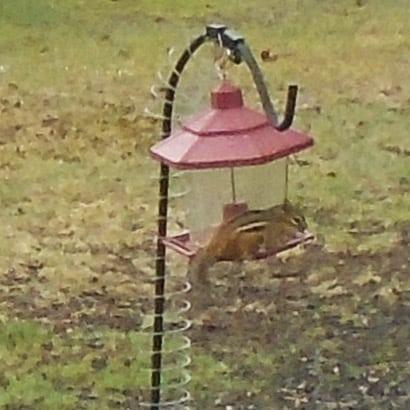 chipmunk and best squirrel-proof bird feeder