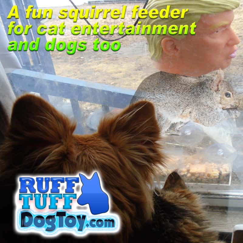 fun squirrel feeder for cat entertainment and dogs too