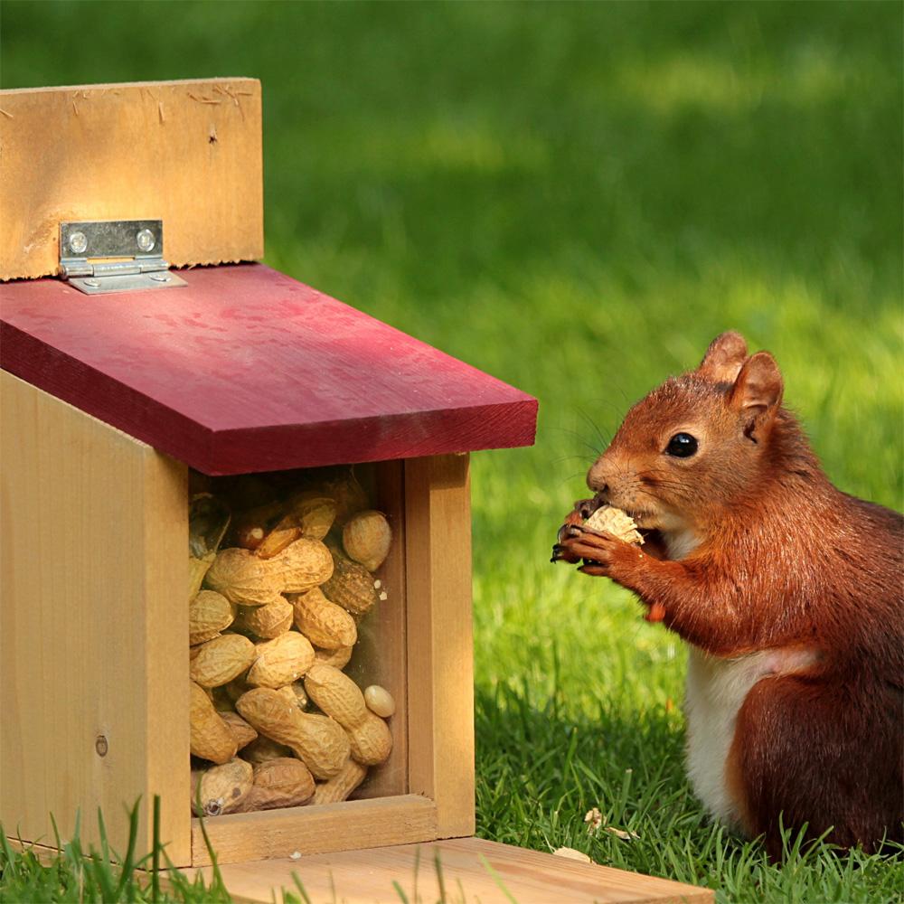 Calming Squirrels Nut Bar Movie